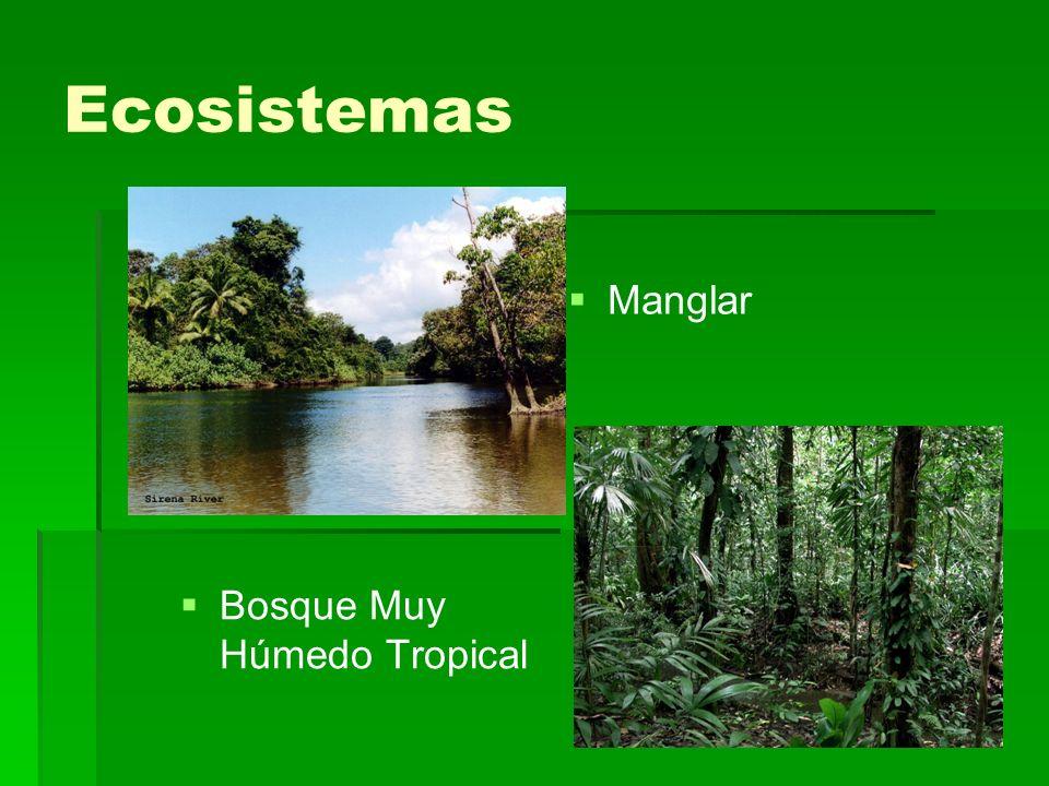 Ecosistemas Manglar Bosque Muy Húmedo Tropical