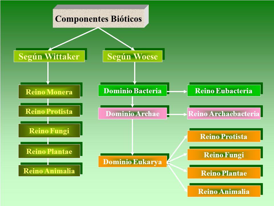Componentes Bióticos Según Wittaker Según Woese