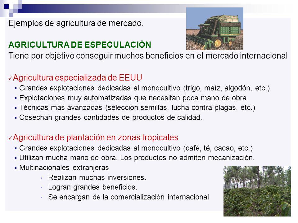 Ejemplos de agricultura de mercado. AGRICULTURA DE ESPECULACIÓN