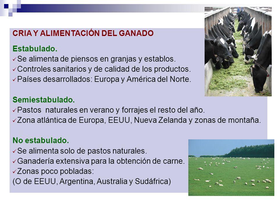 CRIA Y ALIMENTACIÓN DEL GANADO