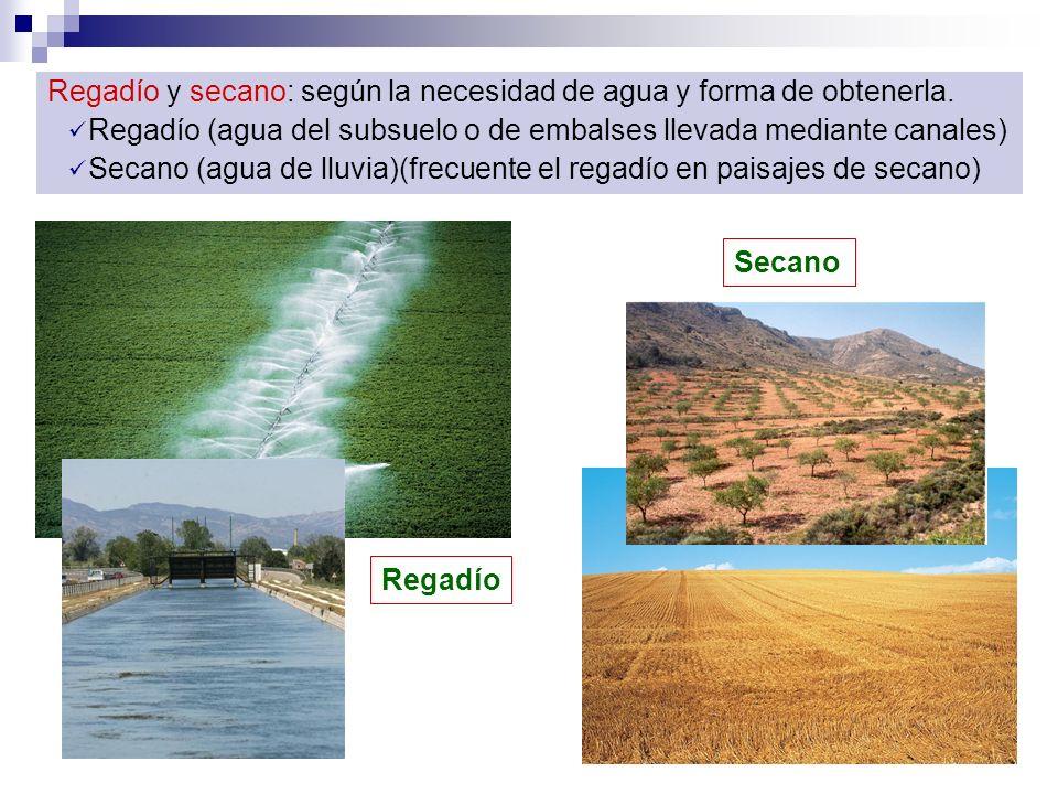 Regadío y secano: según la necesidad de agua y forma de obtenerla.