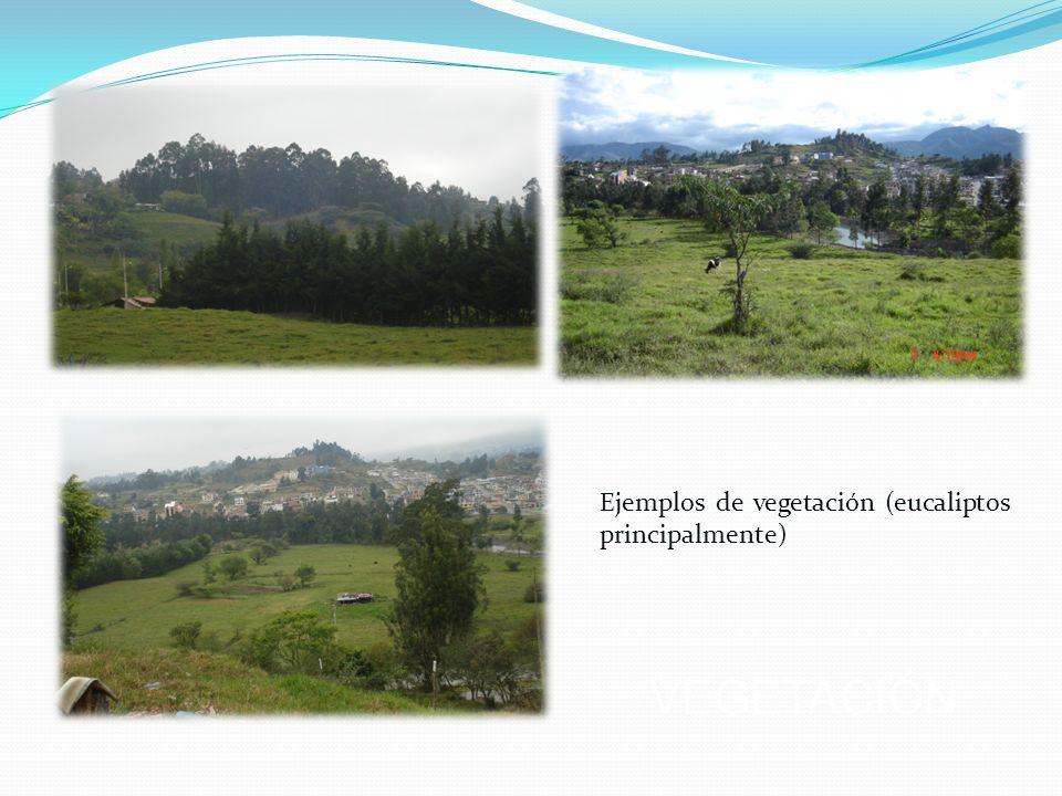 Ejemplos de vegetación (eucaliptos principalmente)