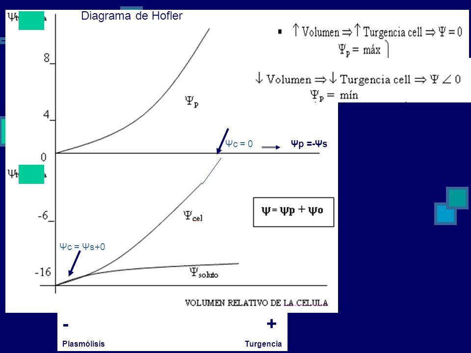 Diagrama de Hofler Ψc = 0. Ψp =-Ψs. Ψc = Ψs+0. - +