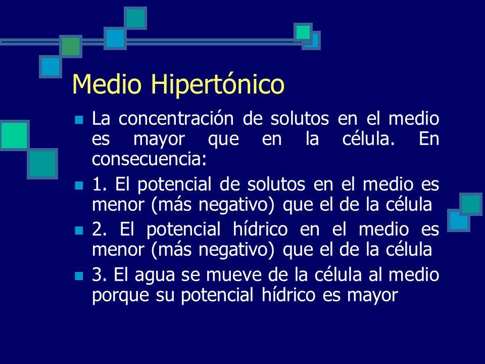 Medio Hipertónico La concentración de solutos en el medio es mayor que en la célula. En consecuencia: