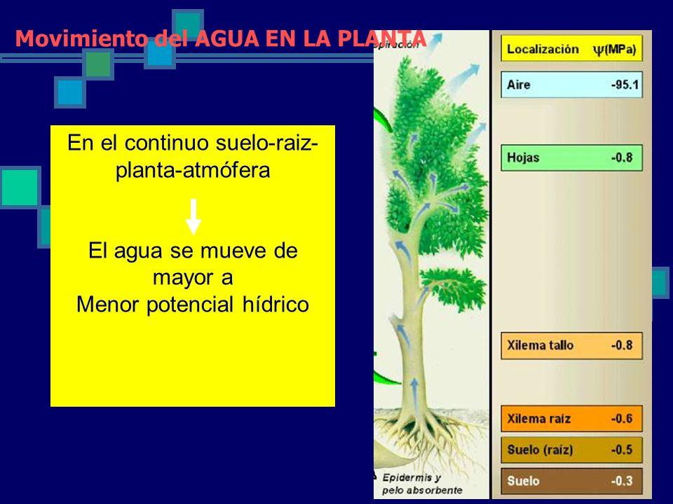 Movimiento del AGUA EN LA PLANTA