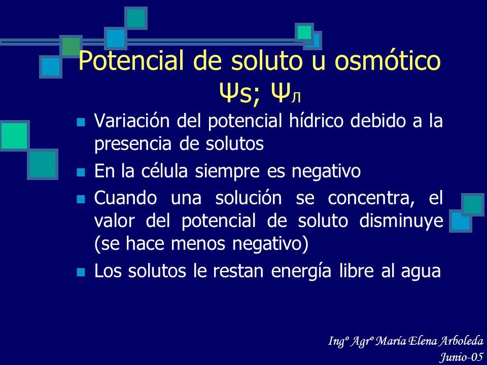 Potencial de soluto u osmótico Ψs; ΨЛ