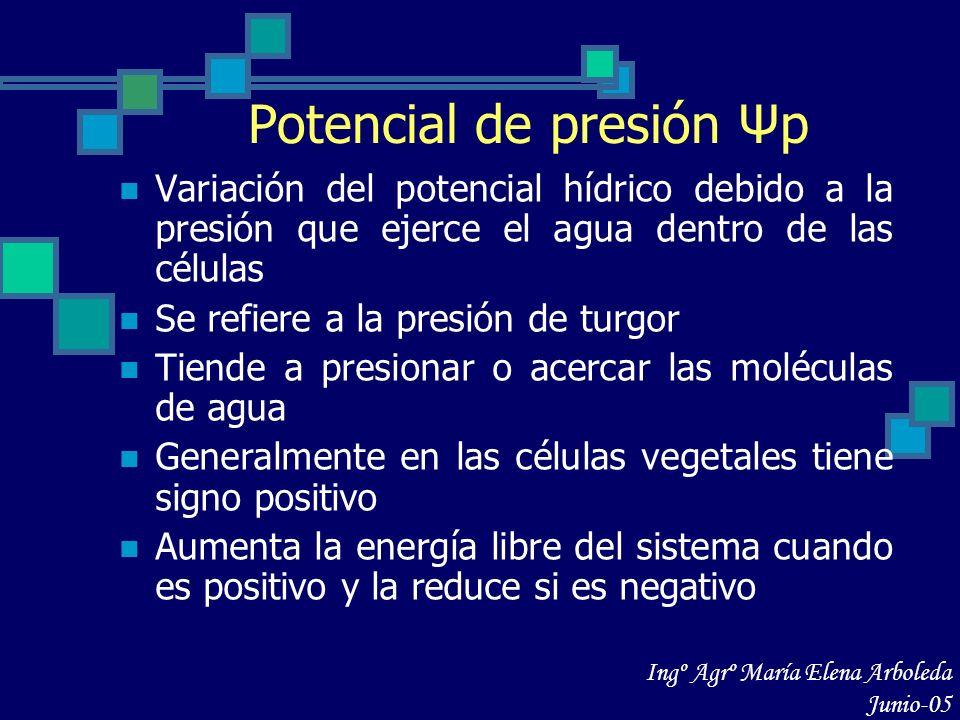 Potencial de presión Ψp