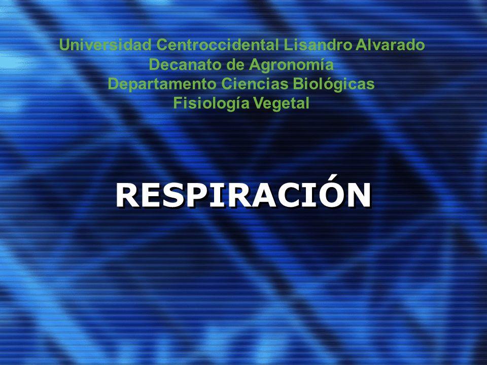 RESPIRACIÓN Universidad Centroccidental Lisandro Alvarado
