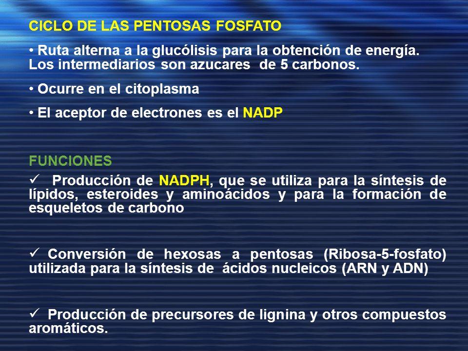 CICLO DE LAS PENTOSAS FOSFATO