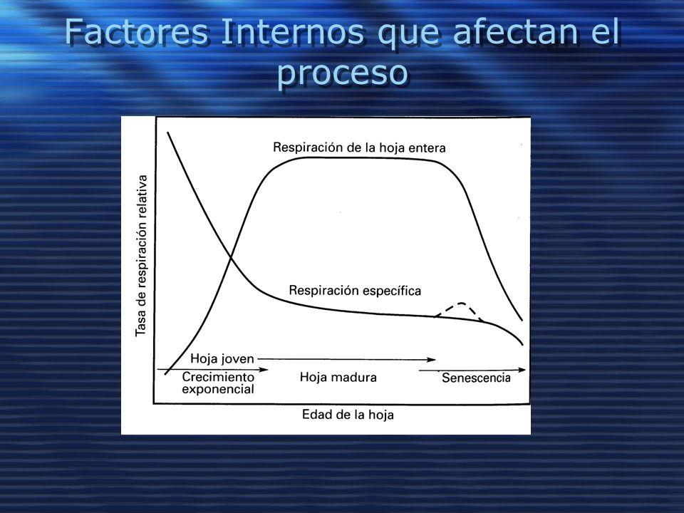 Factores Internos que afectan el proceso