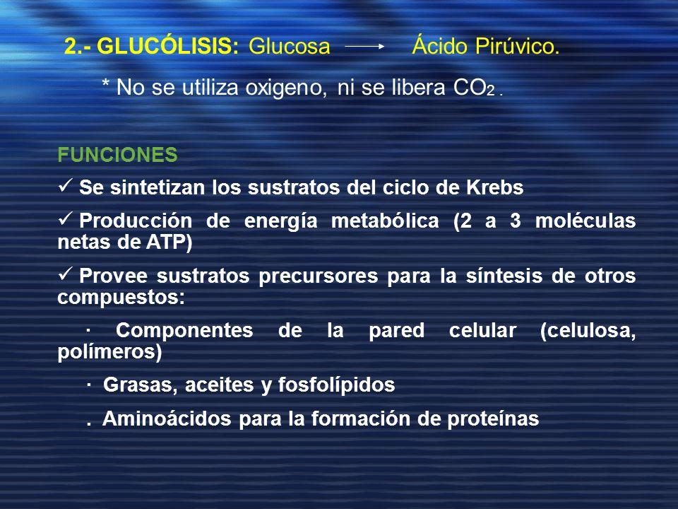 2.- GLUCÓLISIS: Glucosa Ácido Pirúvico.