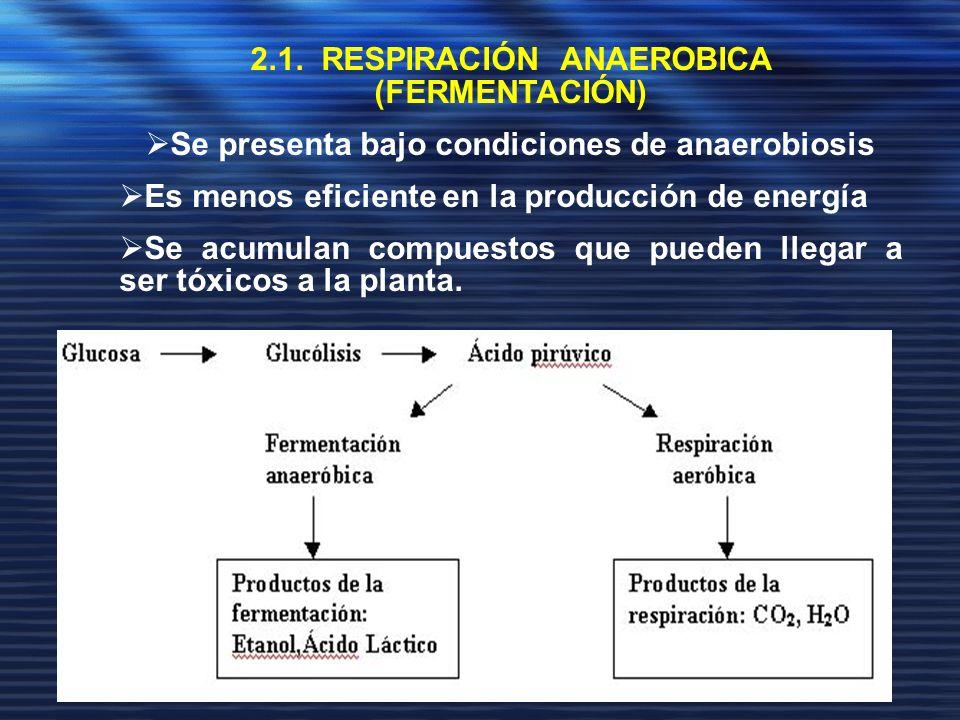 2.1. RESPIRACIÓN ANAEROBICA (FERMENTACIÓN)