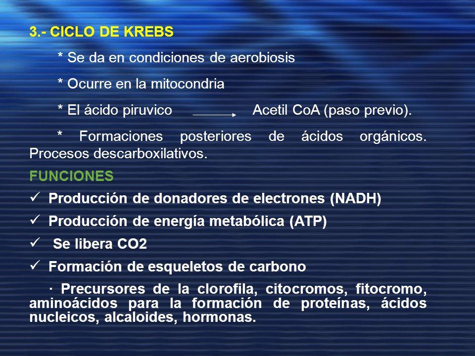 3.- CICLO DE KREBS* Se da en condiciones de aerobiosis. * Ocurre en la mitocondria. * El ácido piruvico Acetil CoA (paso previo).