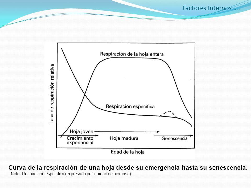 Factores Internos …. Curva de la respiración de una hoja desde su emergencia hasta su senescencia.