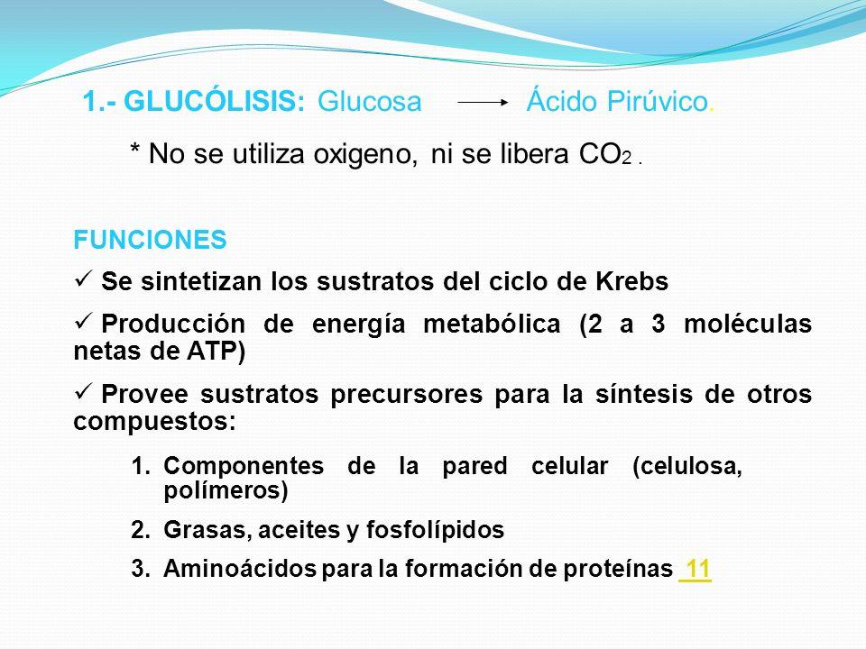 1.- GLUCÓLISIS: Glucosa Ácido Pirúvico.