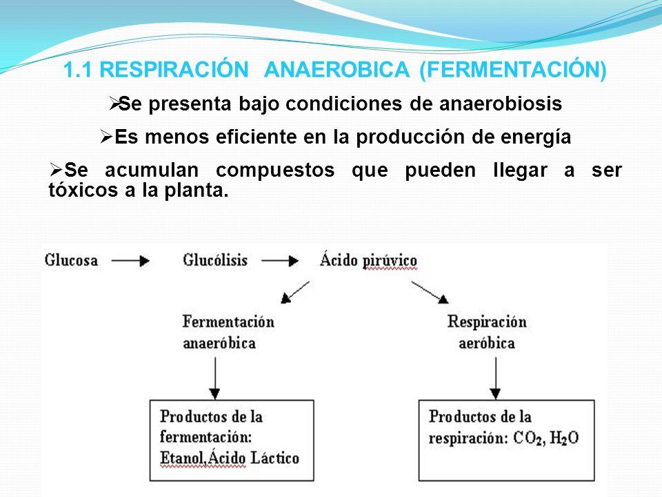 1.1 RESPIRACIÓN ANAEROBICA (FERMENTACIÓN)