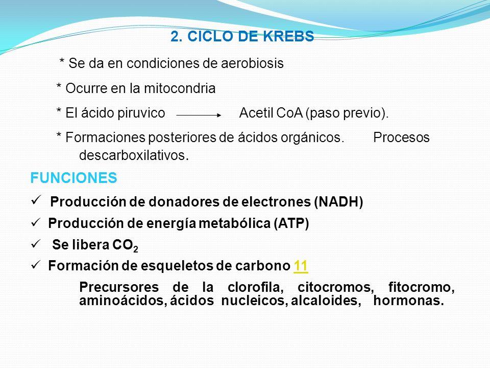 * Se da en condiciones de aerobiosis