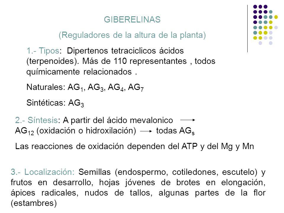 5.- EFECTOS FISIOLOGICOS Promueve formación de raíces adventicias