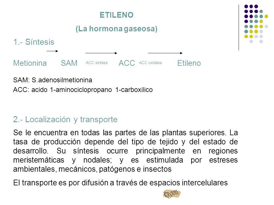 5.- Efectos Fisiológicos División celular en tallos y raíces