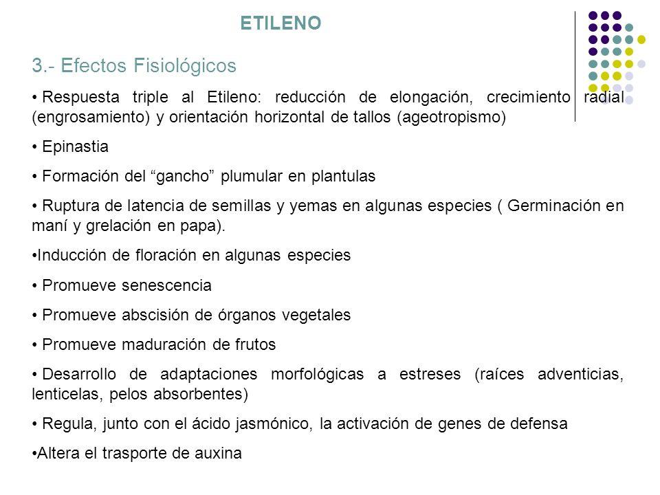 Propagación de plantas in vitro