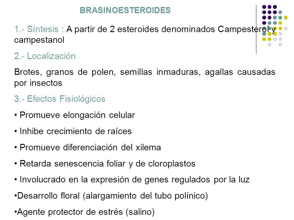 3.- Efectos Fisiológicos