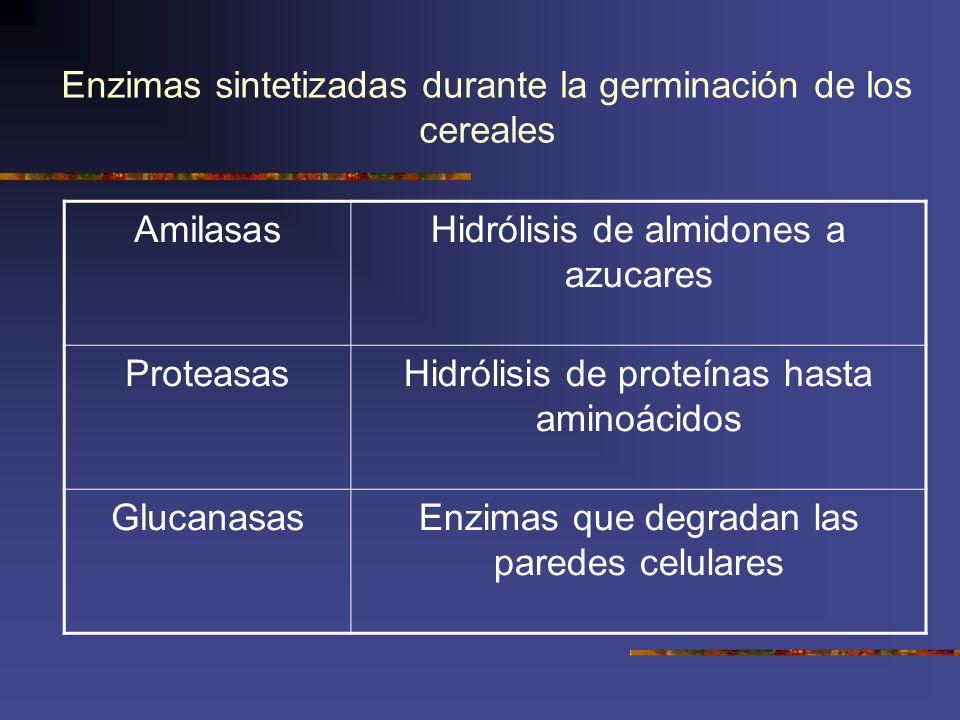 Enzimas sintetizadas durante la germinación de los cereales