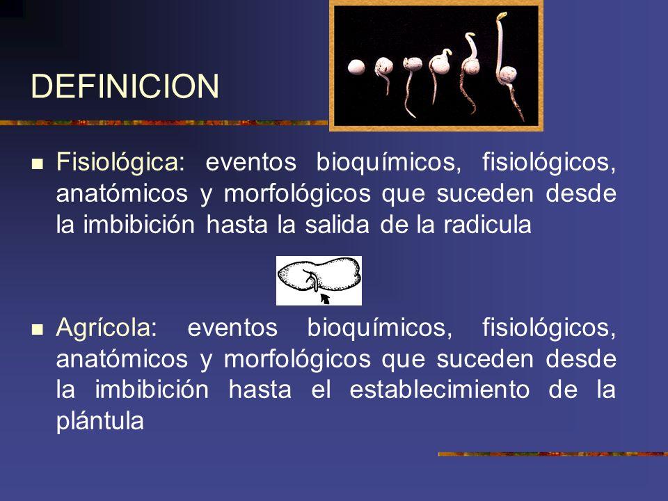 DEFINICION Fisiológica: eventos bioquímicos, fisiológicos, anatómicos y morfológicos que suceden desde la imbibición hasta la salida de la radicula.