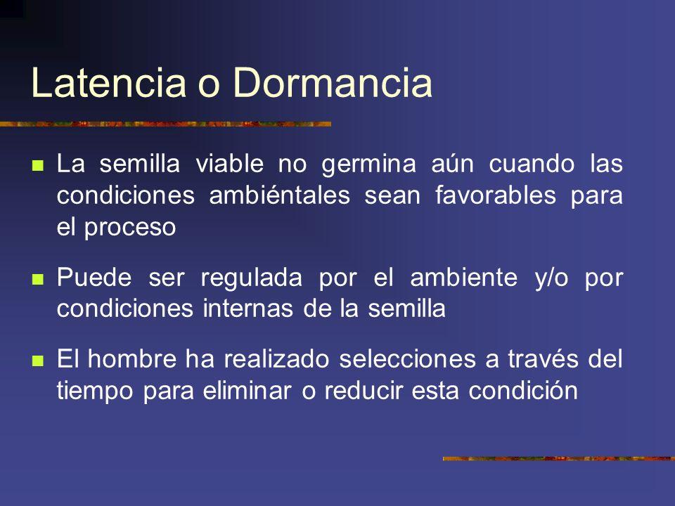 Latencia o Dormancia La semilla viable no germina aún cuando las condiciones ambiéntales sean favorables para el proceso.