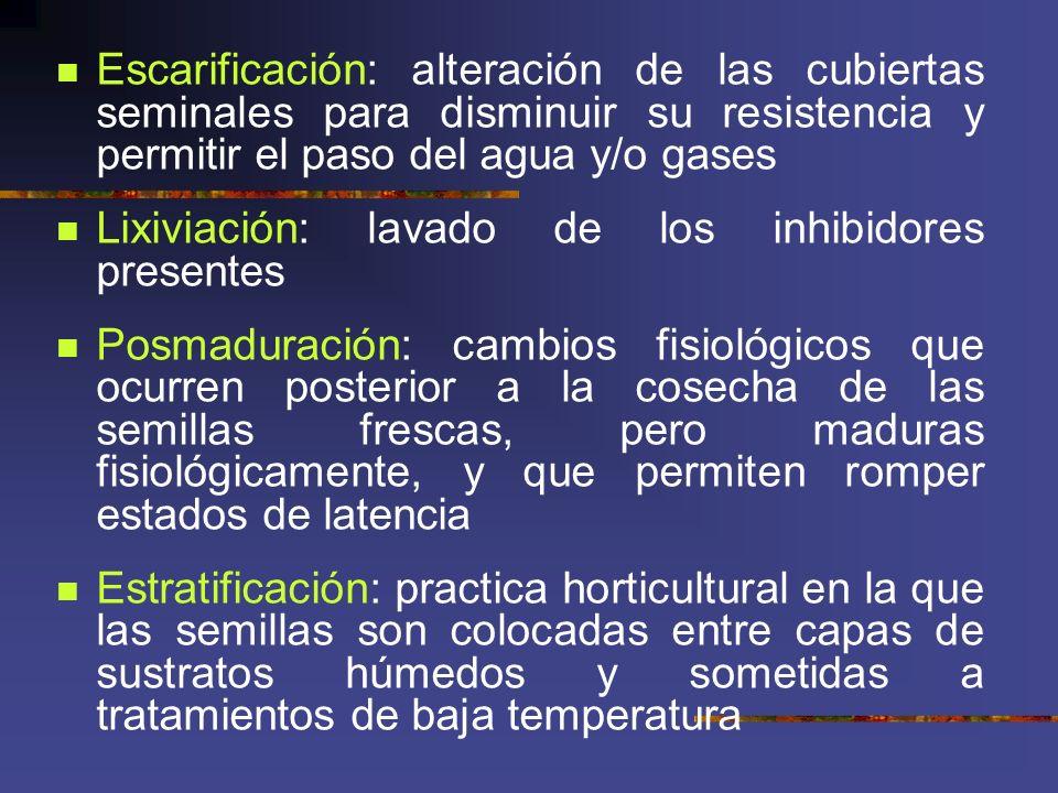 Escarificación: alteración de las cubiertas seminales para disminuir su resistencia y permitir el paso del agua y/o gases