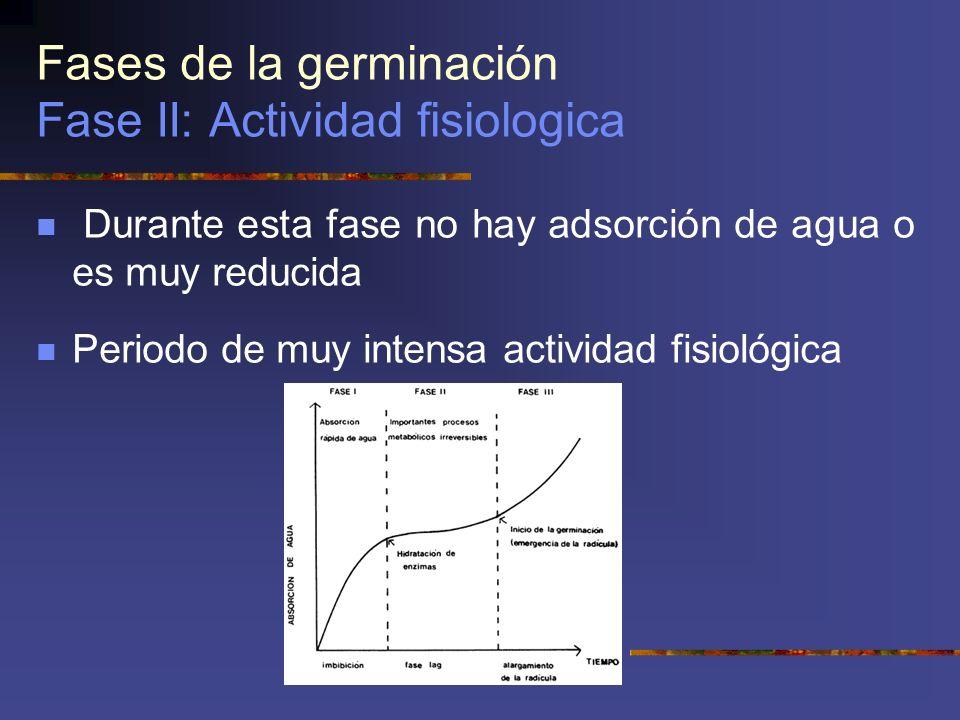 Fases de la germinación Fase II: Actividad fisiologica
