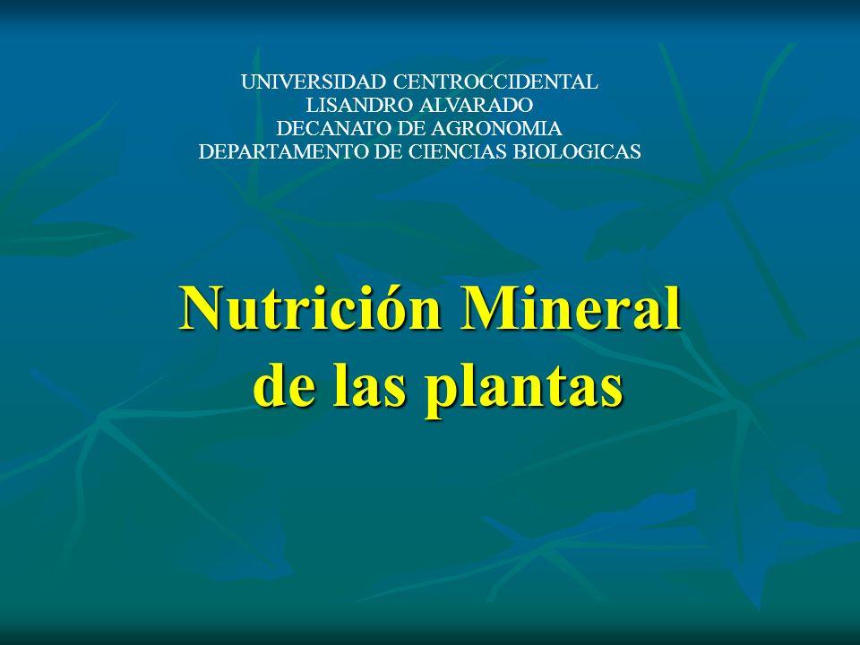 Nutrición Mineral de las plantas