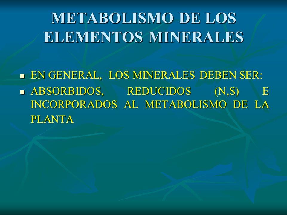 METABOLISMO DE LOS ELEMENTOS MINERALES
