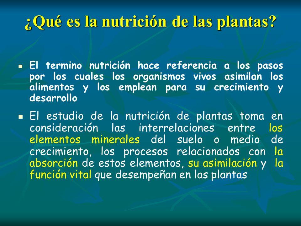 ¿Qué es la nutrición de las plantas