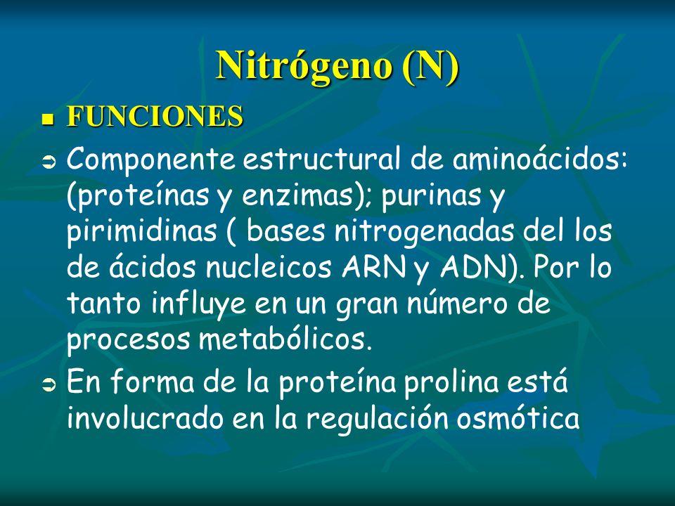 Nitrógeno (N) FUNCIONES