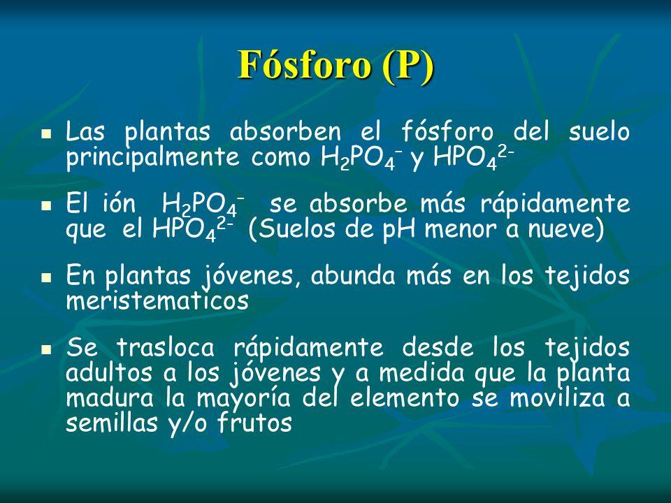 Fósforo (P) Las plantas absorben el fósforo del suelo principalmente como H2PO4– y HPO42-