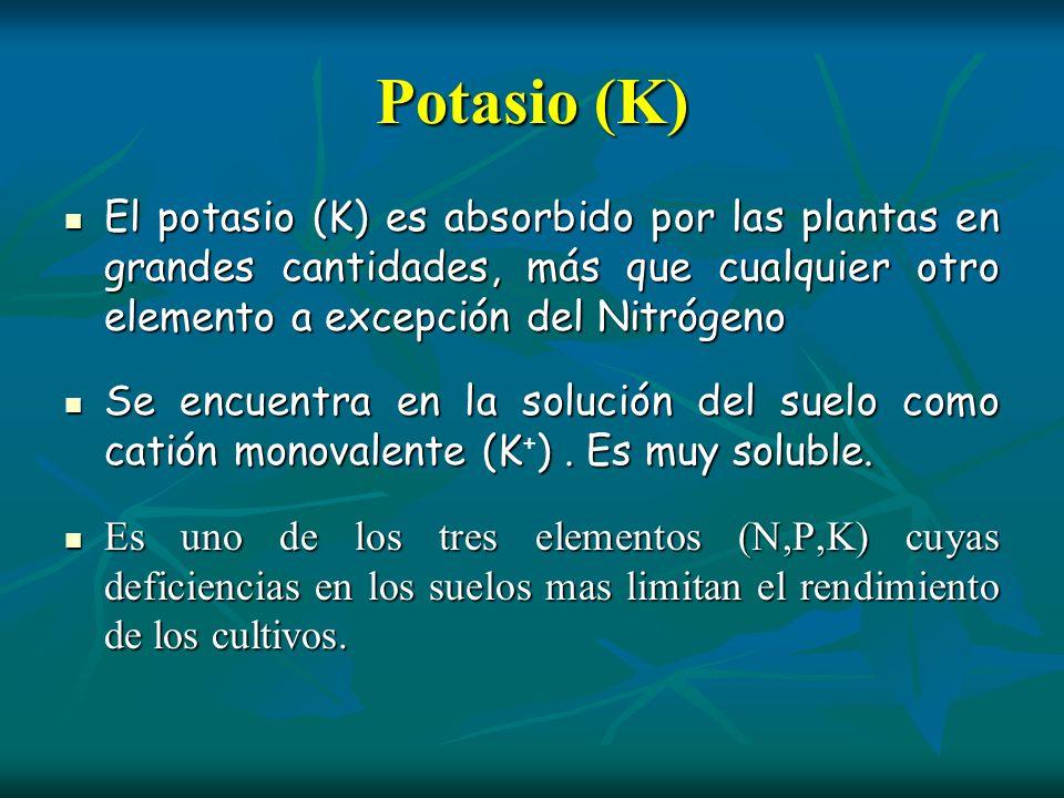 Potasio (K)El potasio (K) es absorbido por las plantas en grandes cantidades, más que cualquier otro elemento a excepción del Nitrógeno.