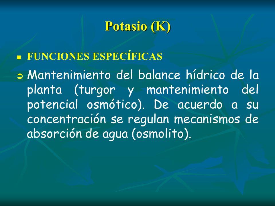 Potasio (K) FUNCIONES ESPECÍFICAS.