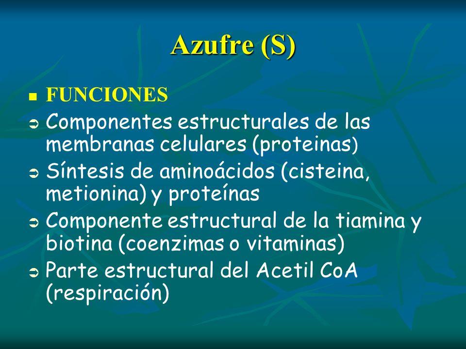 Azufre (S)FUNCIONES. Componentes estructurales de las membranas celulares (proteinas) Síntesis de aminoácidos (cisteina, metionina) y proteínas.
