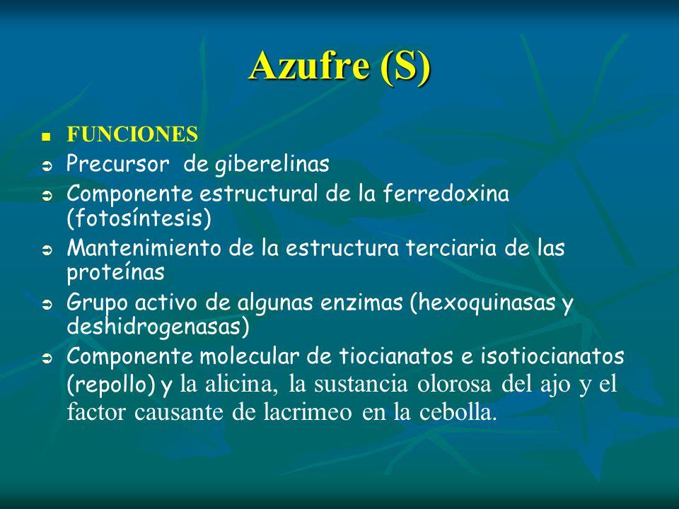 Azufre (S) FUNCIONES Precursor de giberelinas