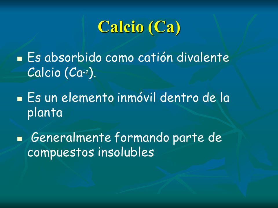 Calcio (Ca) Es absorbido como catión divalente Calcio (Ca+2).
