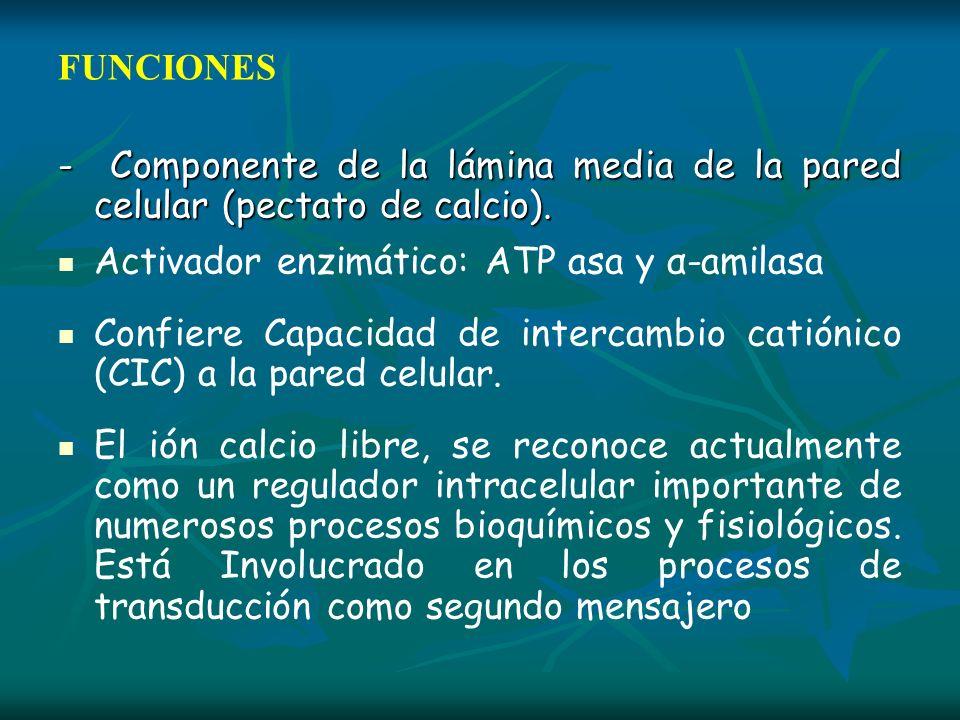 FUNCIONES- Componente de la lámina media de la pared celular (pectato de calcio). Activador enzimático: ATP asa y α-amilasa.