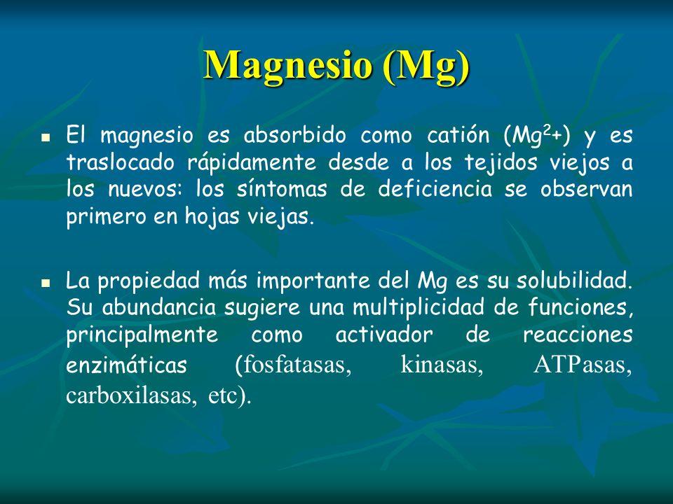 Magnesio (Mg)