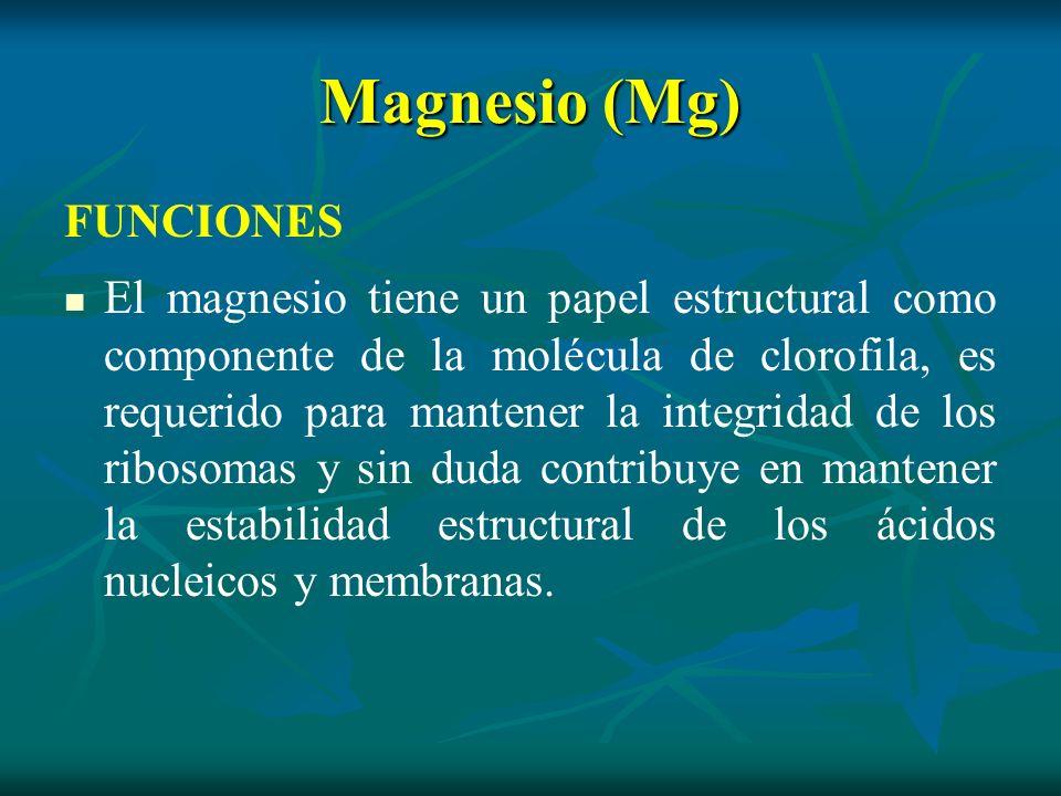 Magnesio (Mg) FUNCIONES