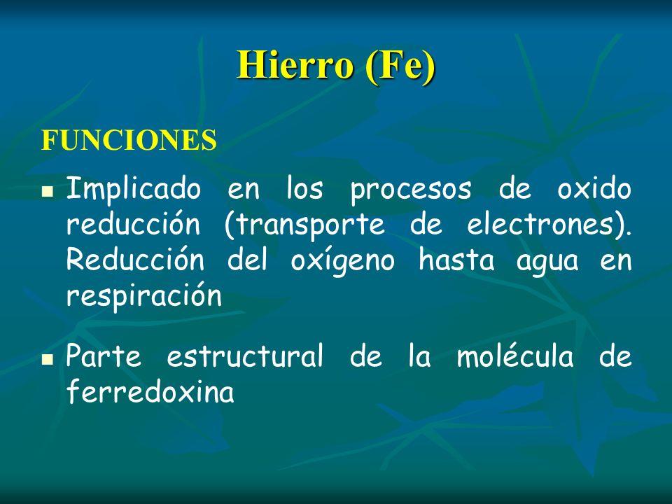 Hierro (Fe)FUNCIONES. Implicado en los procesos de oxido reducción (transporte de electrones). Reducción del oxígeno hasta agua en respiración.