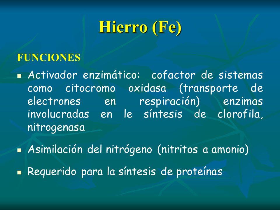 Hierro (Fe)FUNCIONES.