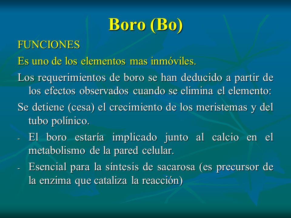 Boro (Bo) FUNCIONES Es uno de los elementos mas inmóviles.