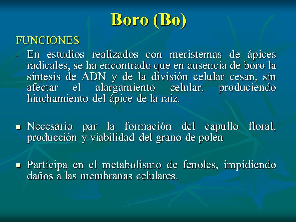 Boro (Bo)FUNCIONES.