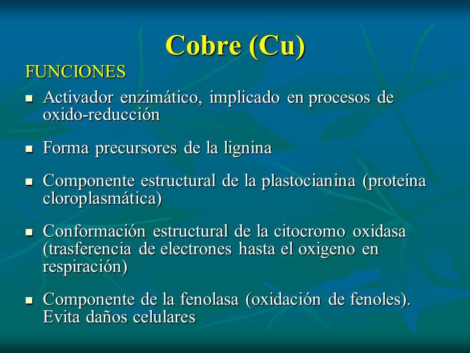 Cobre (Cu)FUNCIONES. Activador enzimático, implicado en procesos de oxido-reducción. Forma precursores de la lignina.
