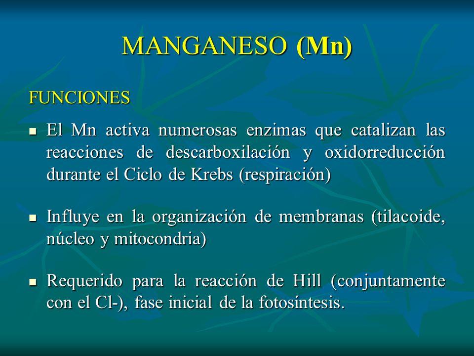 MANGANESO (Mn) FUNCIONES