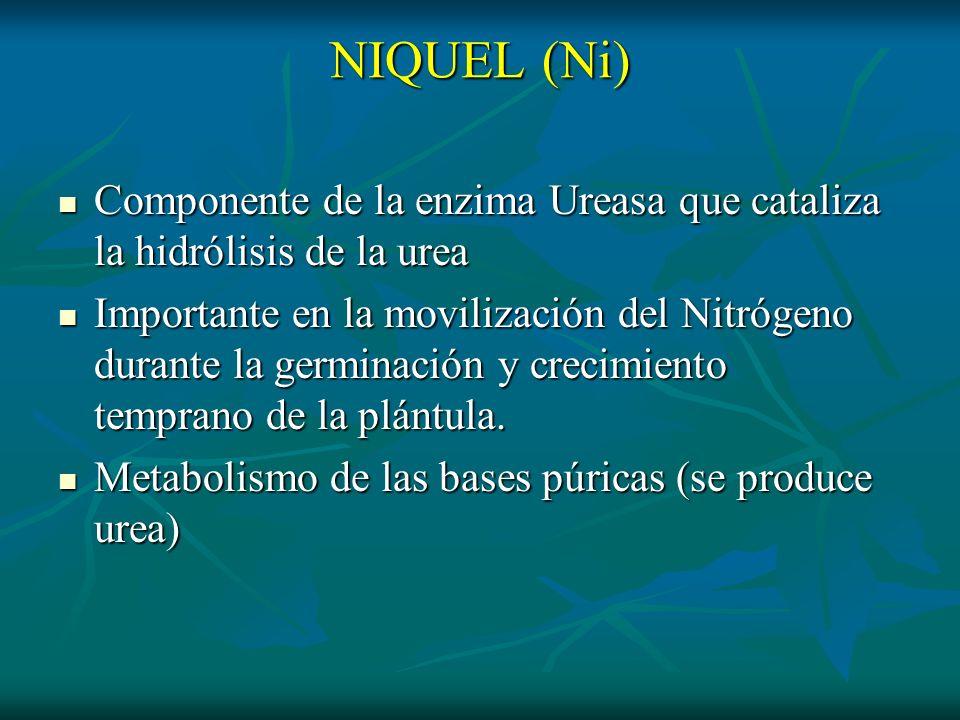 NIQUEL (Ni)Componente de la enzima Ureasa que cataliza la hidrólisis de la urea.